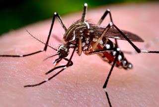 Dengue, Zika e Febre Chikungunya já mataram 410 neste ano no Brasil, aponta MS 1