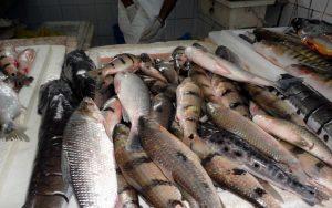 ILHÉUS: Famílias carentes recebem peixes doados por cooperativa 2