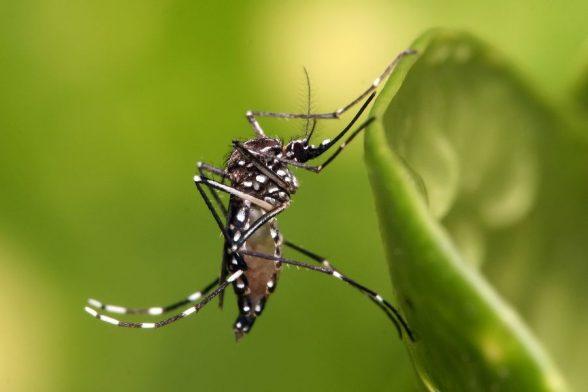 Zika causa danos neurológicos também em adultos, aponta estudo 1