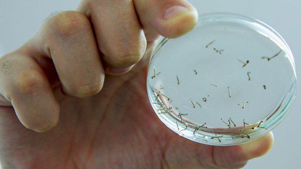 Semana de combate ao Aedes aegypti mobiliza mais de 210 mil instituições 2