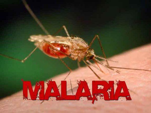 Surto de malária em cidade baiana registra primeira morte 5