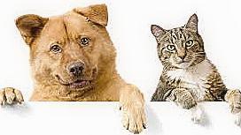 Ilhéus realiza feira de adoção de cães e gatos em maio 3