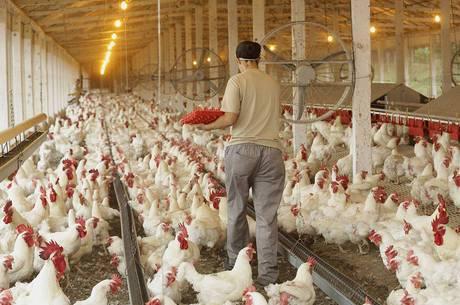 União Europeia proíbe importação de frangos do Brasil a partir de hoje (16) 7