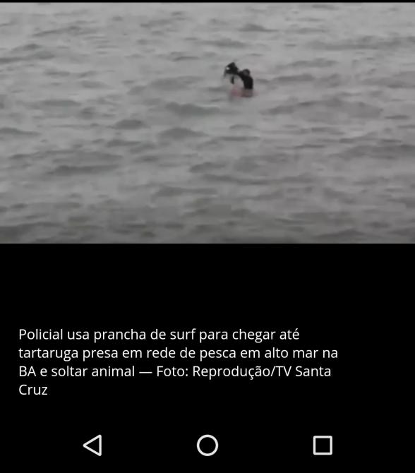 Tartaruga marinha é resgatada por policial com prancha de sur após, ser encontrada presa em rede de pesca em Ilhéus; Assista 1