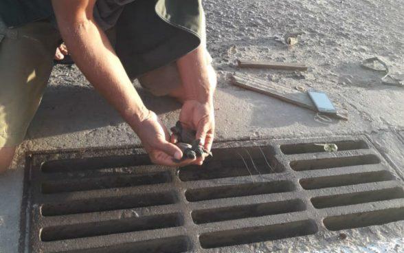 Mais de 50 filhotes de tartaruga-cabeçuda são resgatados de bueiro em Mucuri 1