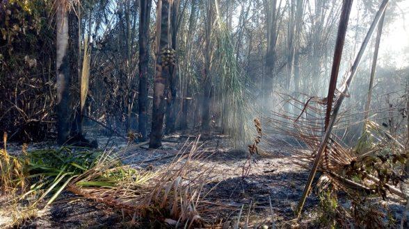 Incêndio destrói vegetação que fica em aldeia indígena de Pau Brasil; Ilhéus registrou ontem (14) incêndio em área indígena 2