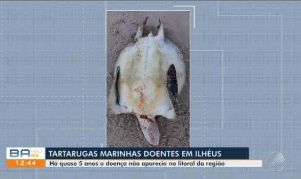 Doença que provoca verrugas em tartarugas marinhas volta a aparecer no Sul da Bahia após 5 anos 1