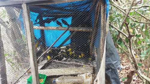 Polícia apreende 75 pássaros silvestres no distrito de Campinhos em Ilhéus 1