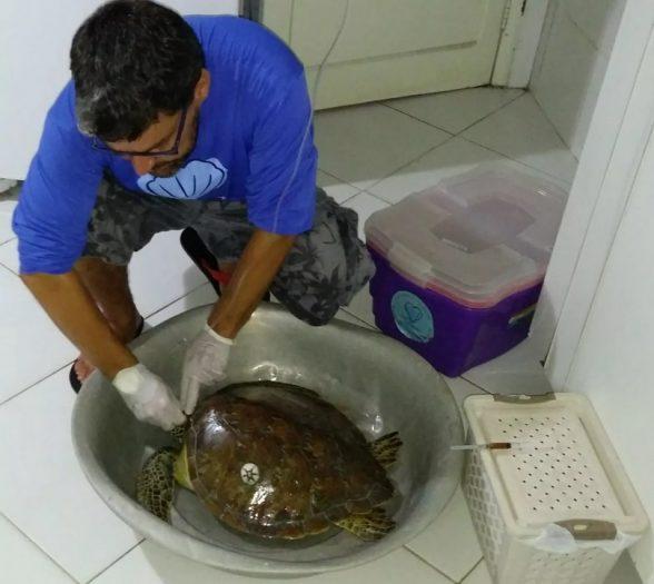 Tartaruga ferida em praia do sul da BA se recupera com soro; ONG contabiliza 46 animais mortos este ano na região 1