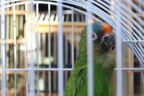 Mais de 500 animais silvestres são resgatados durante operação no sul da Bahia 1