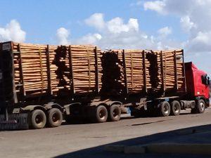 Após 20 anos, 27 mil toneladas de eucalipto serão exportadas do Porto de Ilhéus para a Europa 1
