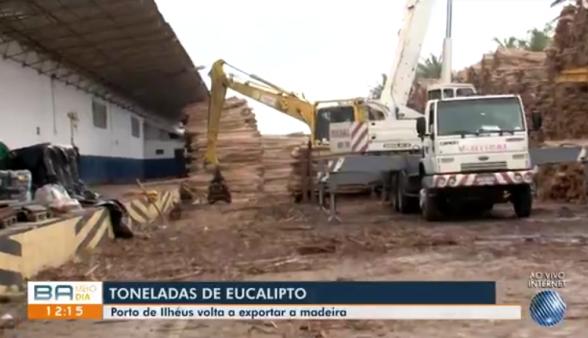 Porto de Aveiro em Portugal vai receber 27 mil toneladas de Eucalipto do Porto de Ilhéus 1