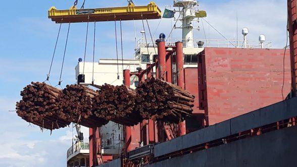Navio chega ao Porto de Ilhéus para carregar eucalipto in natura para Portugal 4