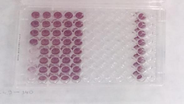 Depósito de patente em co-titularidade entre UFMG, UFSB e FURG identificou potencial fármaco contra leishmanioses 1