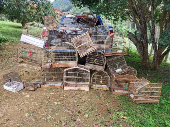 Pássaros silvestres em cativeiros são apreendidos no Sul da Bahia 1