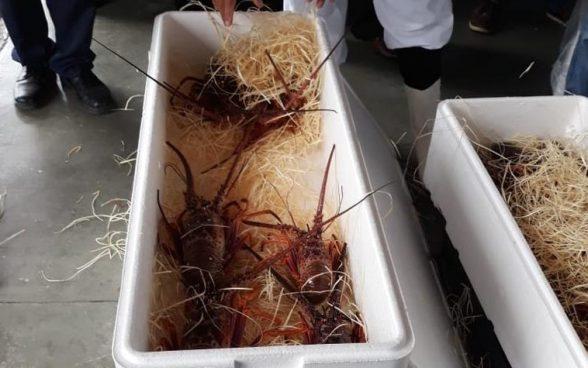 Bahia é destaque na exportação de lagostas vivas através do Aeroporto de Porto Seguro 1