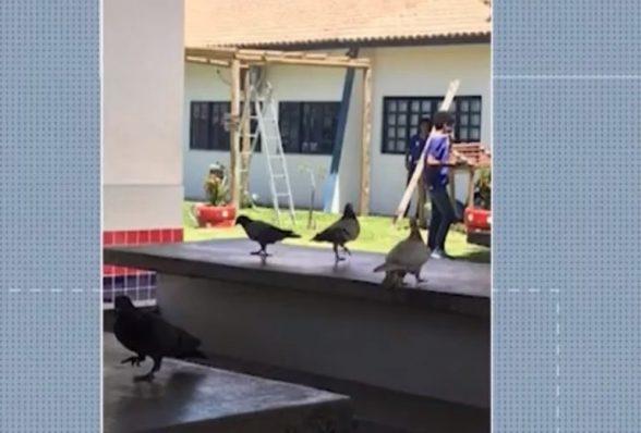 Vídeo mostra infestação de pombos dentro de refeitório de escola em Itabuna 2