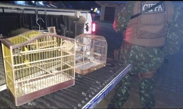 Homem é detido após ser flagrado com falcões e um tatu morto durante ação para reduzir crimes contra a fauna no sul da Bahia 1