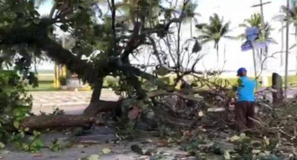 ILHÉUS: MP-BA ENTRA COM AÇÃO CONTRA DERRUBADA DE ÁRVORES NA SOARES LOPES 6